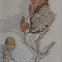 Oak Twig with Acorns