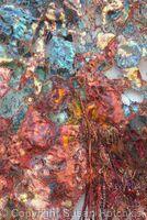 Metamorphosis Detail