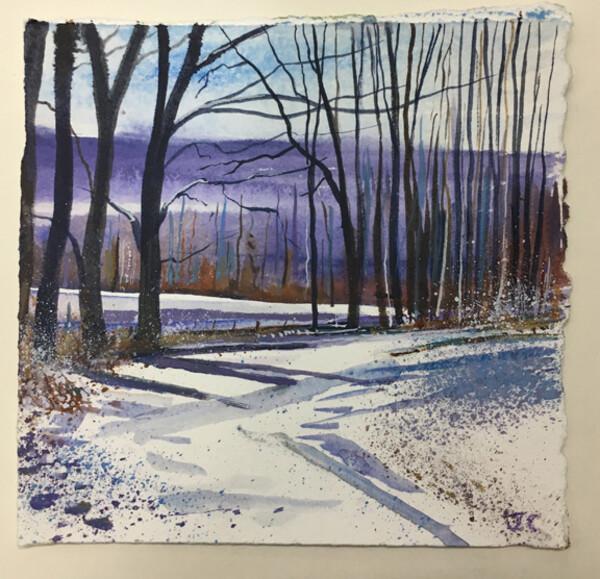 Winter Woodland Walk Day 318