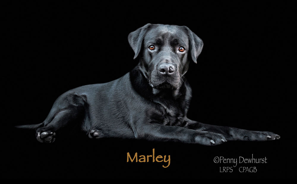 Marley book cover