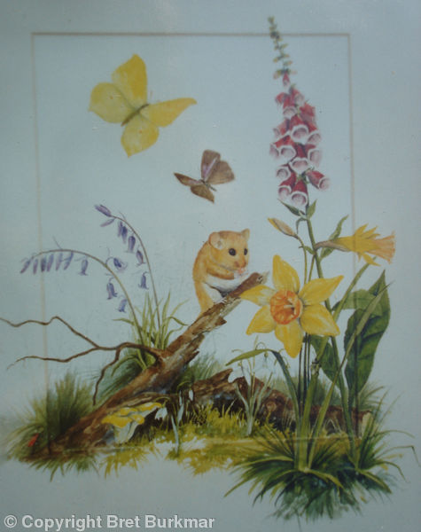 Wildlife Illustration 1