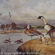 Slimbridge Birds