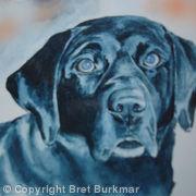 Dog Portrait 3