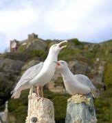 Jackie Summerfield, Seagulls