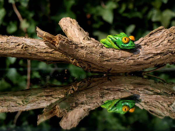 clay frog on branch