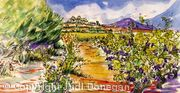 Vineyard Pinet Languedoc