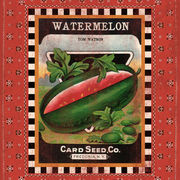 Watermelon Seed Pack