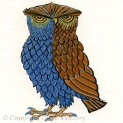 Owl bird greetings card