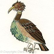 Capercaillie bird card