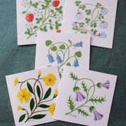 Flower cards set of five assorted floral notecards