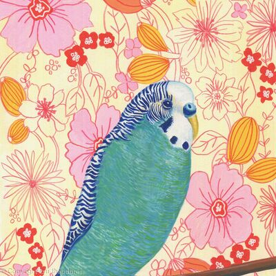 1960s Budgie