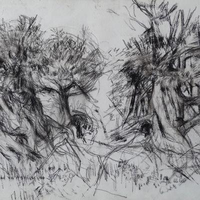 Borrowdale Yews I