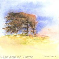Windblown Trees at Beachy Head