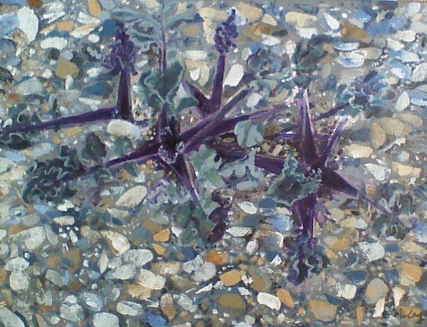 Seakale in shingle