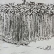 Betel nut palms