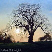 Spring Oak, Brockwell Park.