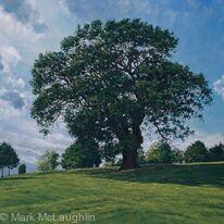Summer Oak, Brockwell Park.