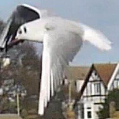 seagulls over dovercourt