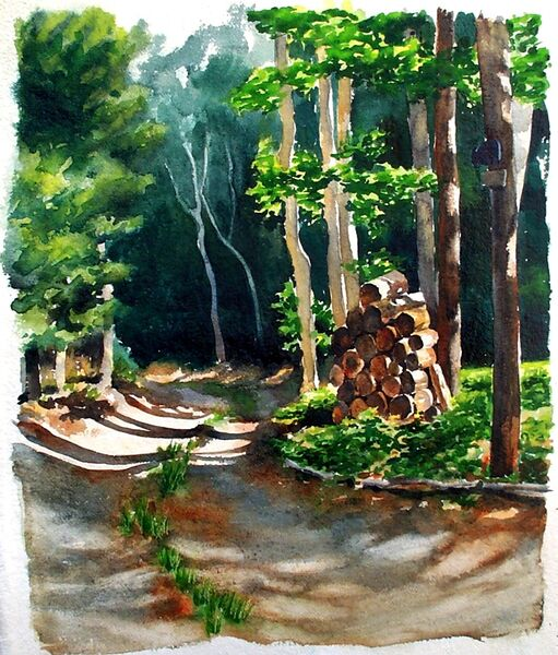 DG Munro's Woodpile