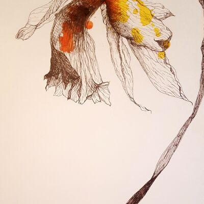 Wilting Daffodil