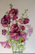 Hollyhocks - 988