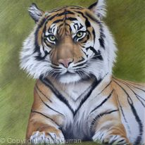 Sumatran tiger II