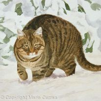 Siberian Tigger