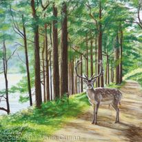Path at Glendalough