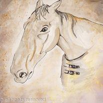 Horse, Head