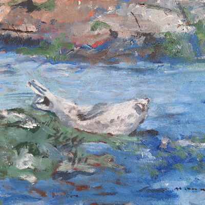 Farne Islands seal napping