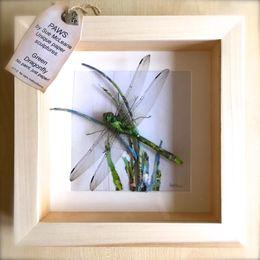 Green Hawker Dragonfly