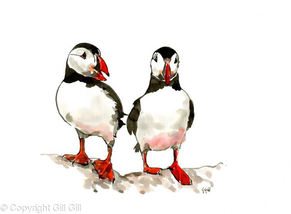 Puffin Discussion