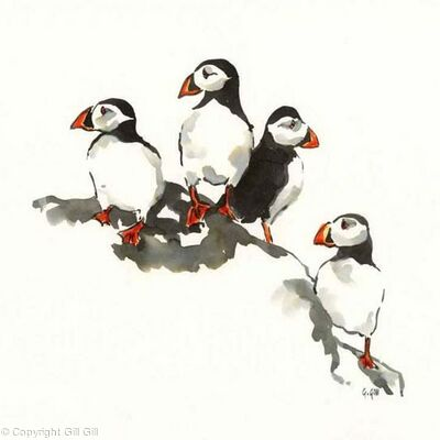 Puffin Watch