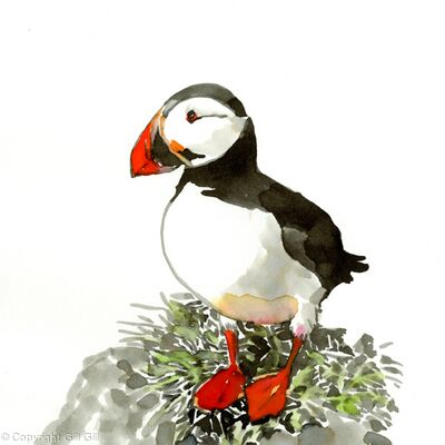 Puffin Downtime