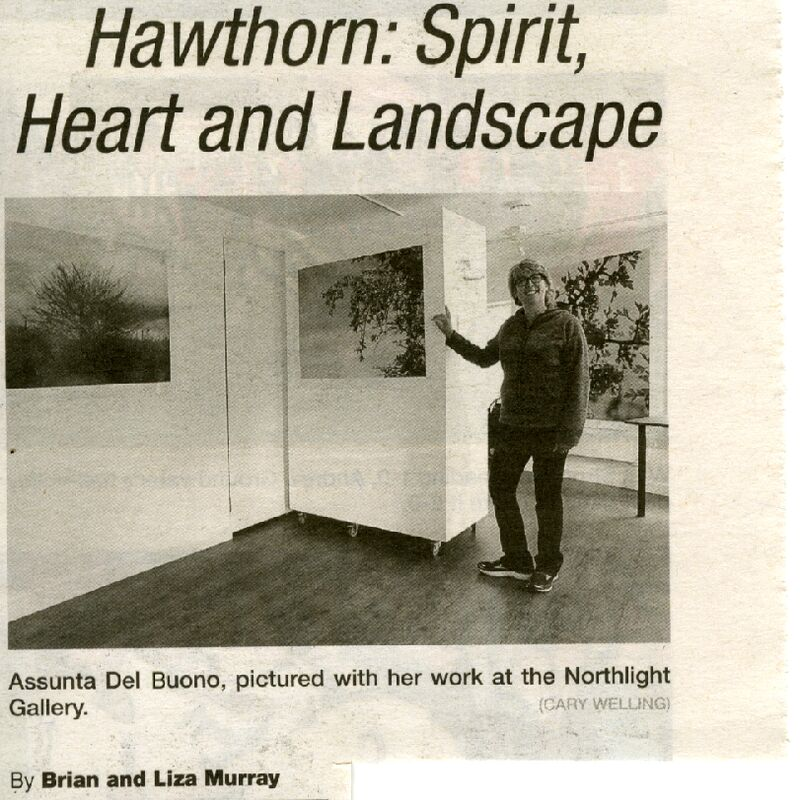 Hawthorn: Spirit, Heart and Landscape press release
