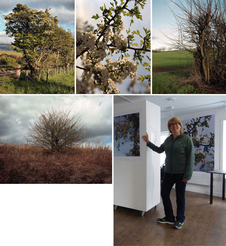 Views of Hawthorn: Spirit, Heart and Landscape