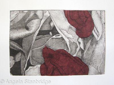 Tulipmania 19 - Etching - Burgandy