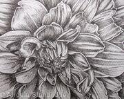 B/W Dahlia Flower 1