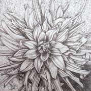 B/W Dahlia Flower 2