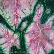 Coleus Plant 2