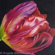 Large Red Tulip1