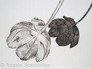 Tulipmania 1 - Pen