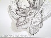 Tulipmania 2 - Pen