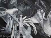 Tulipmania 16 - Black and White