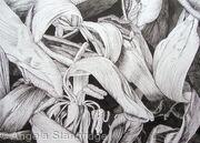 Tulipmania 17 Pen