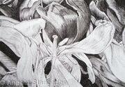 Tulipmania 16 - Pen