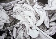 Tulipmania 19 - Pen