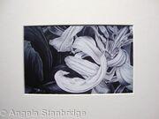 Tulipmania 11 - Print White Mount