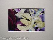 Tulipmania 11 - Print Cream Mount