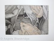Tulipmania 19 - Etching - Peach